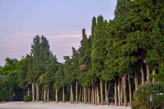 13 Vela luka beach by Sanja Grgi† �uri†